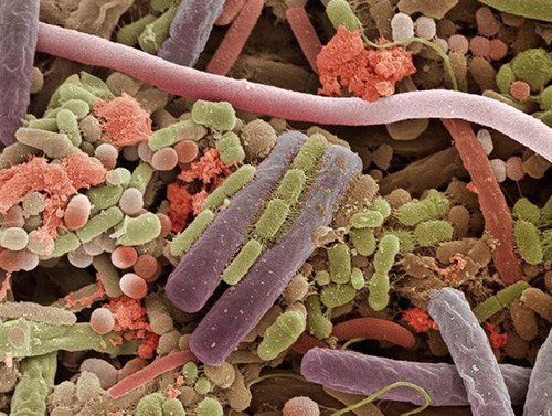 Бактерии, живущие на языке человека