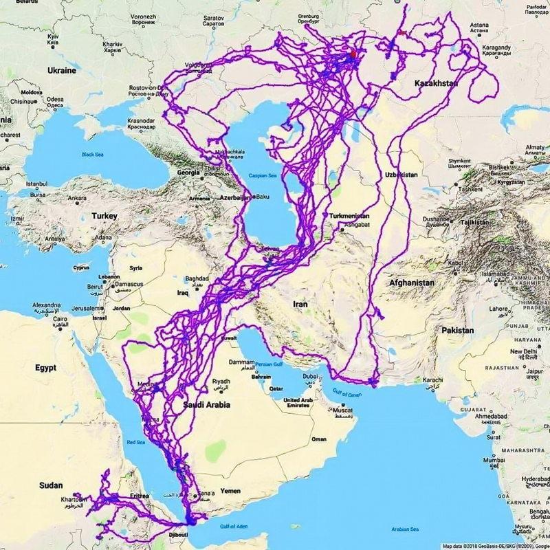 Отслеживание путей полета орла в течение 20 лет