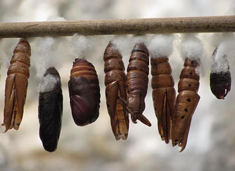 Куда пропадают все насекомые осенью?